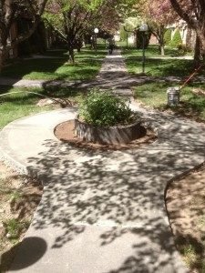 decorative concrete accent
